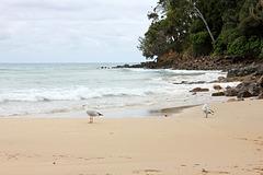 316/365 Gull's beach