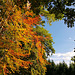 Sur le chemin de l'automne / On the path to autumn [ON EXPLORE]
