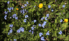HANWE To ALL- Quelques fleurettes de mon pré