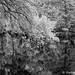 Trout Creek - Hillsborough River 001