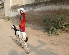 Gang mit Ziege