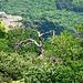 Paysage de l'Ardèche sauvage