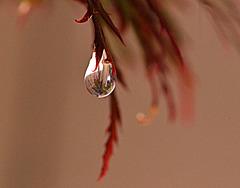 drop of clarity