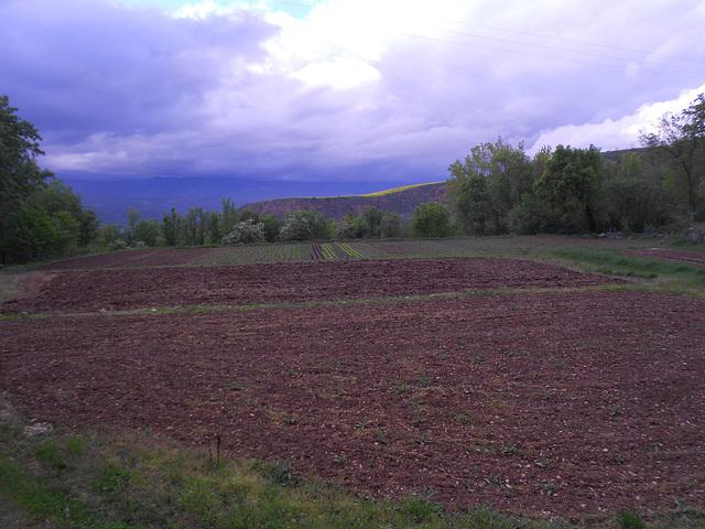Xèrcoles, la kultivejo / Xèrcoles, el camp de cultiu