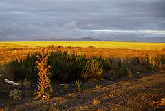 Amanece en La Mancha