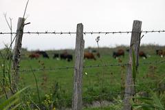 Useful Fence ;-) HFF !