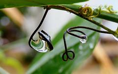 Danse avec la pluie !