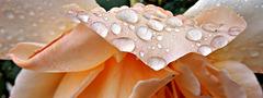 vivement la pluie