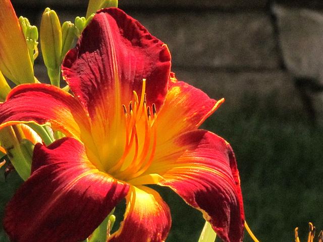Pour fleurir votre fin de semaine !