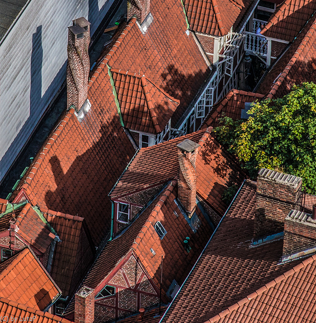 Roofscape - Dachlandschaft