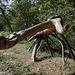 20140911 5143VRAw [NL] Krokodil mit Schlange, Skulptur, Terschelling