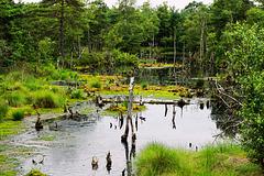 Geheimnisvolles Moor - Mysterious Bog - Marais mystérieux