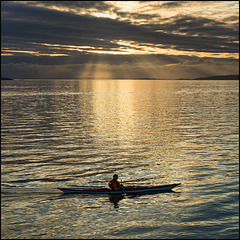 rowing in liquid gold