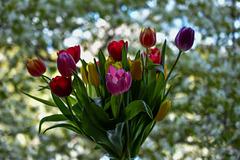 Blumengruß zu Ostern