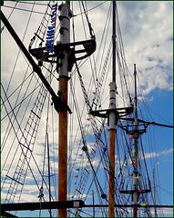 Marseille : Un tre alberi nel porto turistico