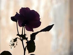 sono romantica :)