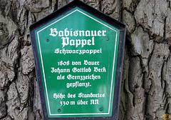 2017-04-13 14 Babisnauer Pappel