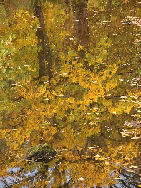 Baumspiegelung mit Stein