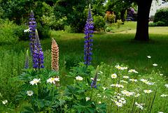 In meinem Garten (PiPs)