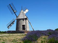 un po' di Olanda in Francia :)