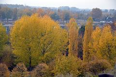 Herbststimmung in Breisach am Rhein
