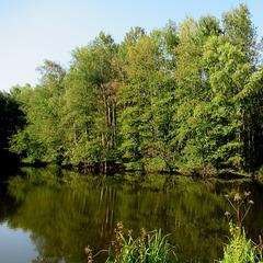 Encore bien vert ici / Still green here!