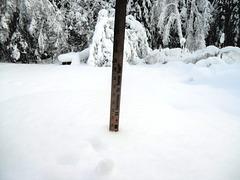 20 inches (51 cm)