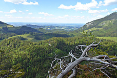 Rabeneck (PiP)