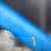 blau-00457-co-07-04-16