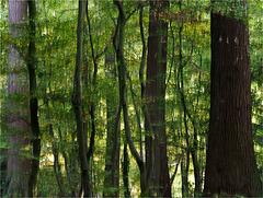 Balade en forêt (automne)