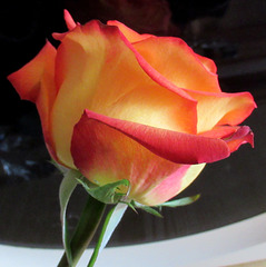 UNE ROSE POUR VOUS / A ROSE FOR YOU