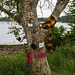The Tartan Tree, Foreshore, Dumbarton