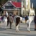 Shimla- Horses for Hire