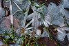 Bodenfrost - ground frost