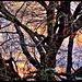 Evening Through Bare Branches..