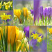 Yellow and Purple, the Colours from this Time of the Year...