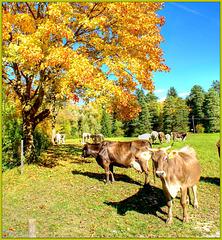 Autumn in the Allgäu. ©UdoSm