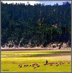 """Parc National Aguelma Azigza"" - Moyen Atlas - MAROC"