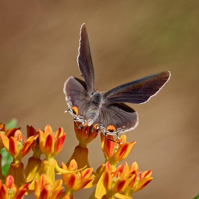 8234202 DxOdc CropM · Butterfly