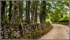 Paseo entre Prados (Espinosa de los Monteros)