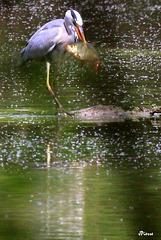 Pêche inespérée