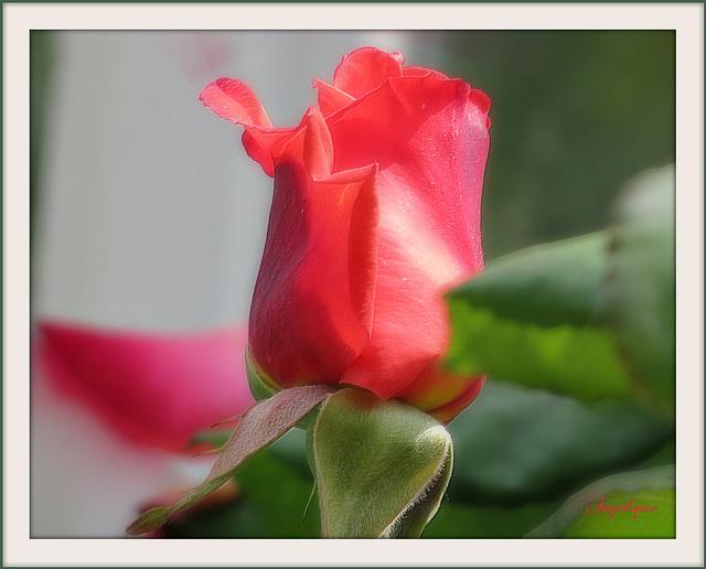 Aujourd'hui journée du Bisou !!!Alors profitez en loll ! Le seul vrai langage au monde est un baiser.