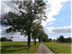 Feldweg bei Wössingen -II