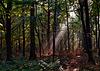 Es wird Herbst im Wald - Autumn mood in the forest