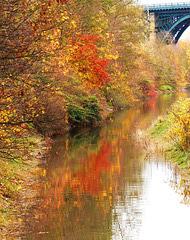 Last of the autumn colour