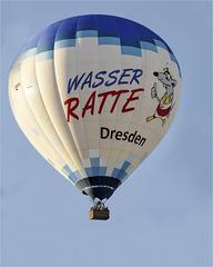 Wasser-Ratte Dresden