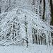20150131 6752VRAw [D~SHG] Schnee, Wesergebirge, Rinteln