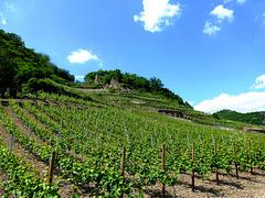 DE - Mayschoß - Weingärten