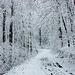 20150131 6754VRAw [D~SHG] Schnee, Wesergebirge, Rinteln