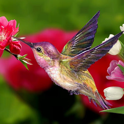 pink roses nature spring birds hummingbird